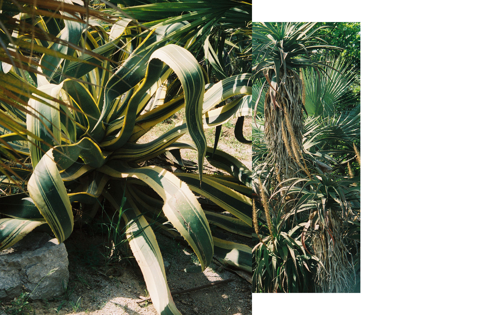 The-Aesthetic-Other-Plantage-10.jpg