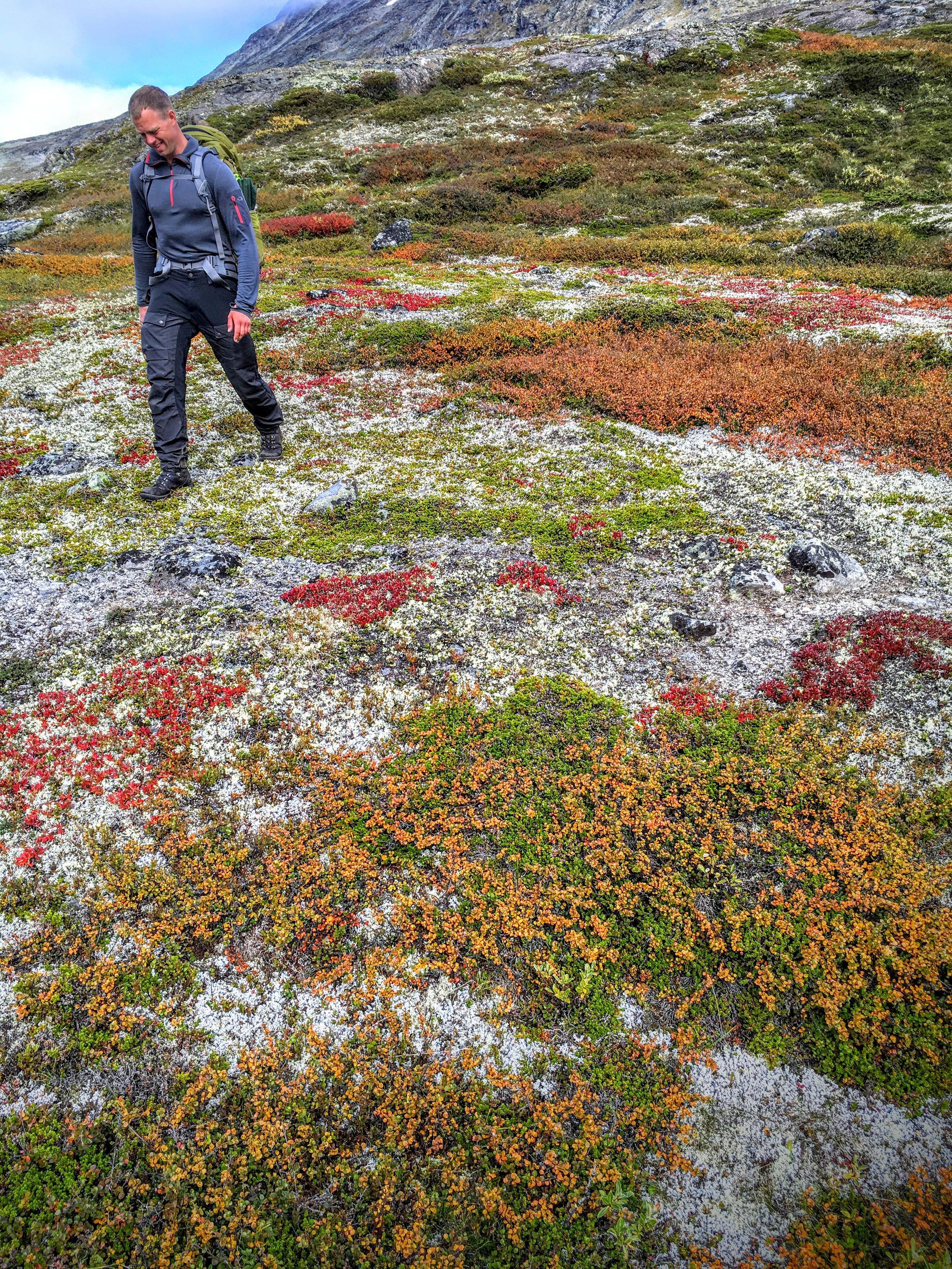 Efterårsfjeldets forskellige farver