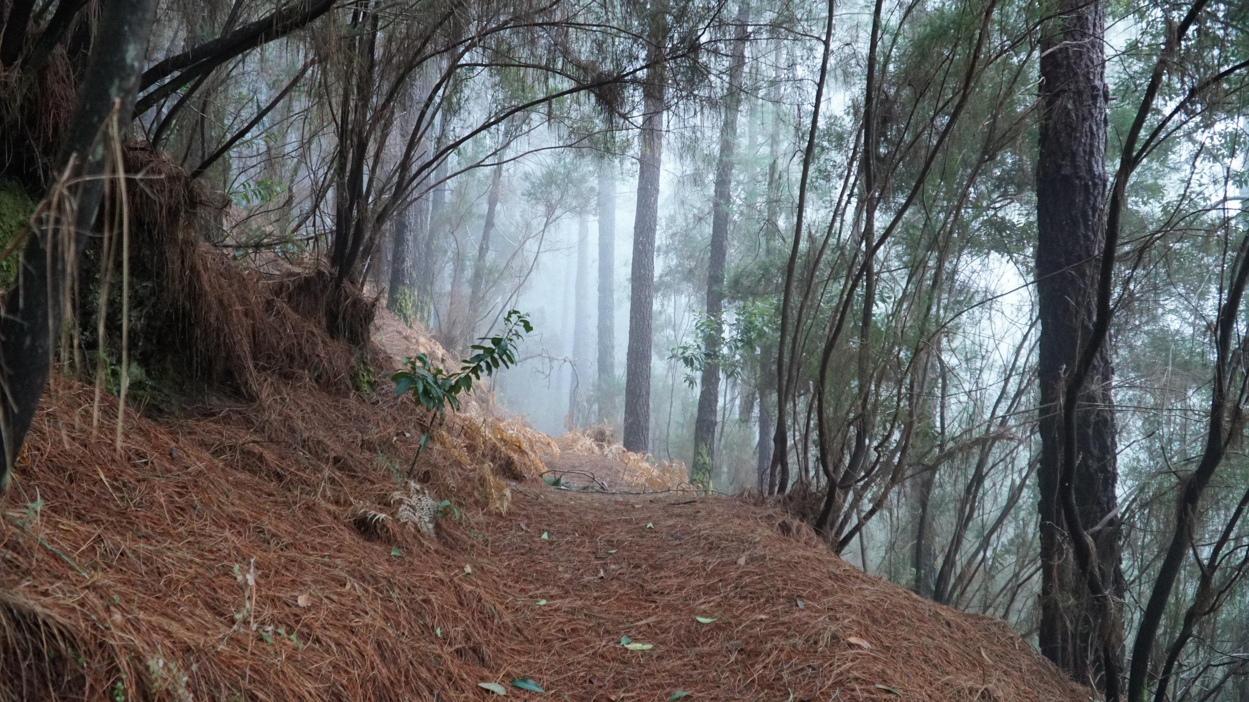 Fyrreskoven på nord-vest-side kan også indbyde til eventyrstemning.