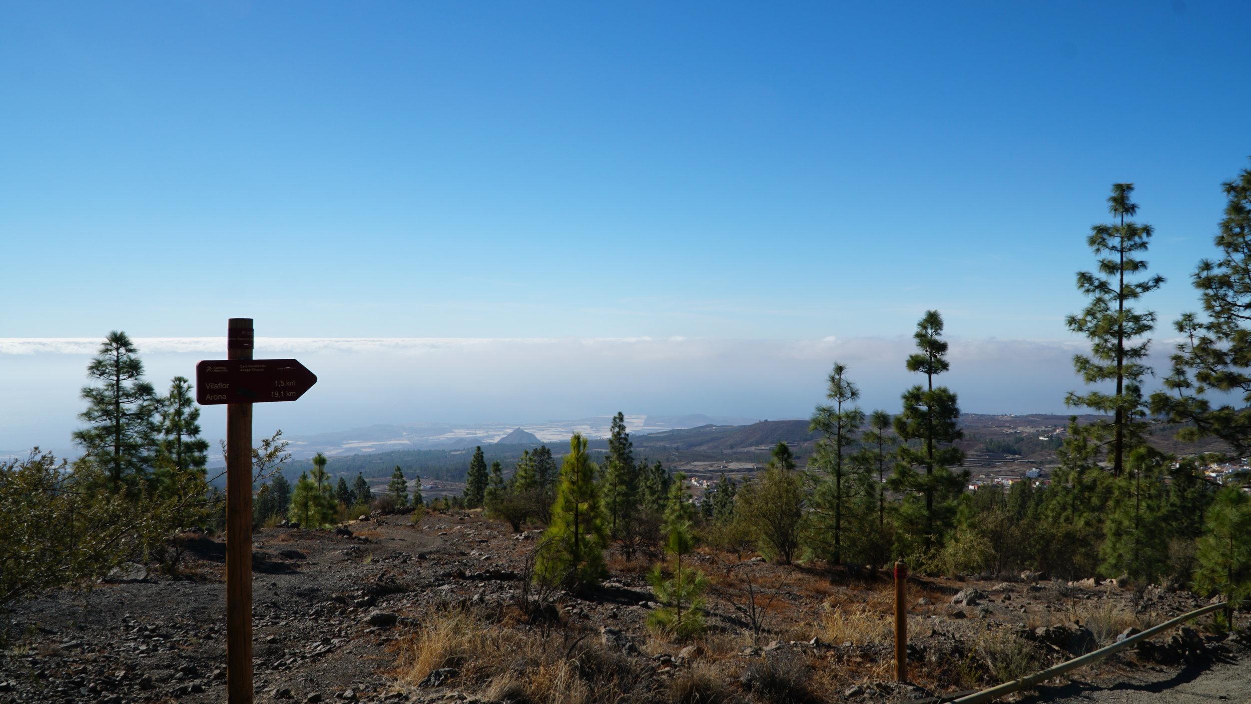 Udsigten over de tynde fyrreskove