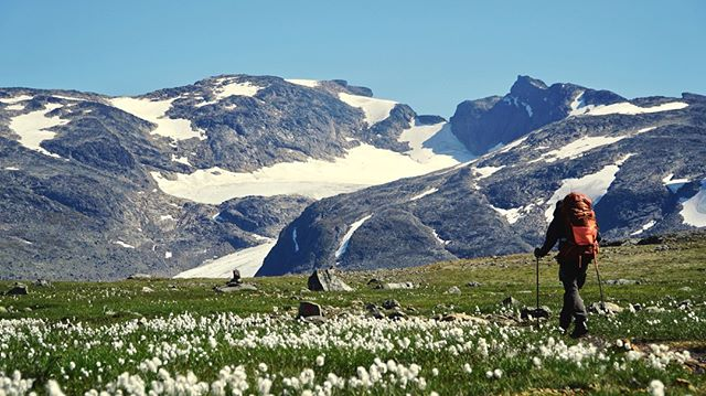 Med Slettmarkbreen i baggrunden står kæruldsmarken ekstra flot i juni måned.  - Juni 2018 - #opdagverden #friluftsliv #udpåtur #jotunheimen #vandretur #slettmarkbreen