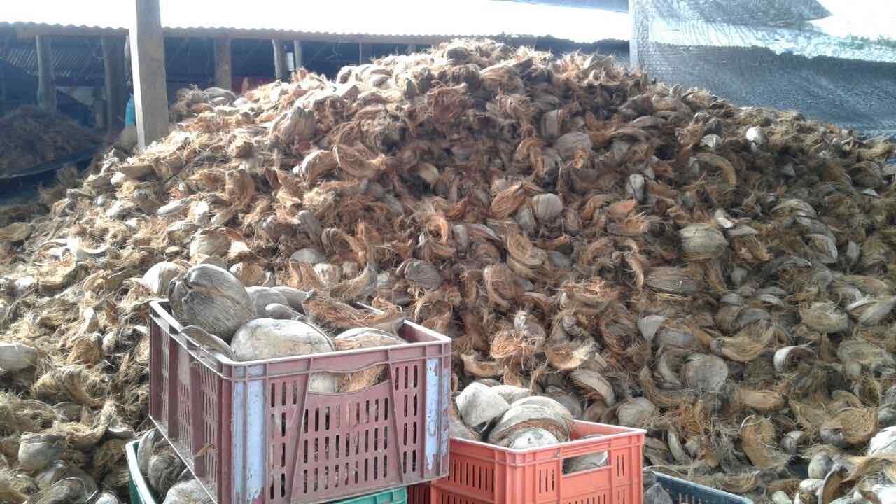 Materia prima cáscara de coco