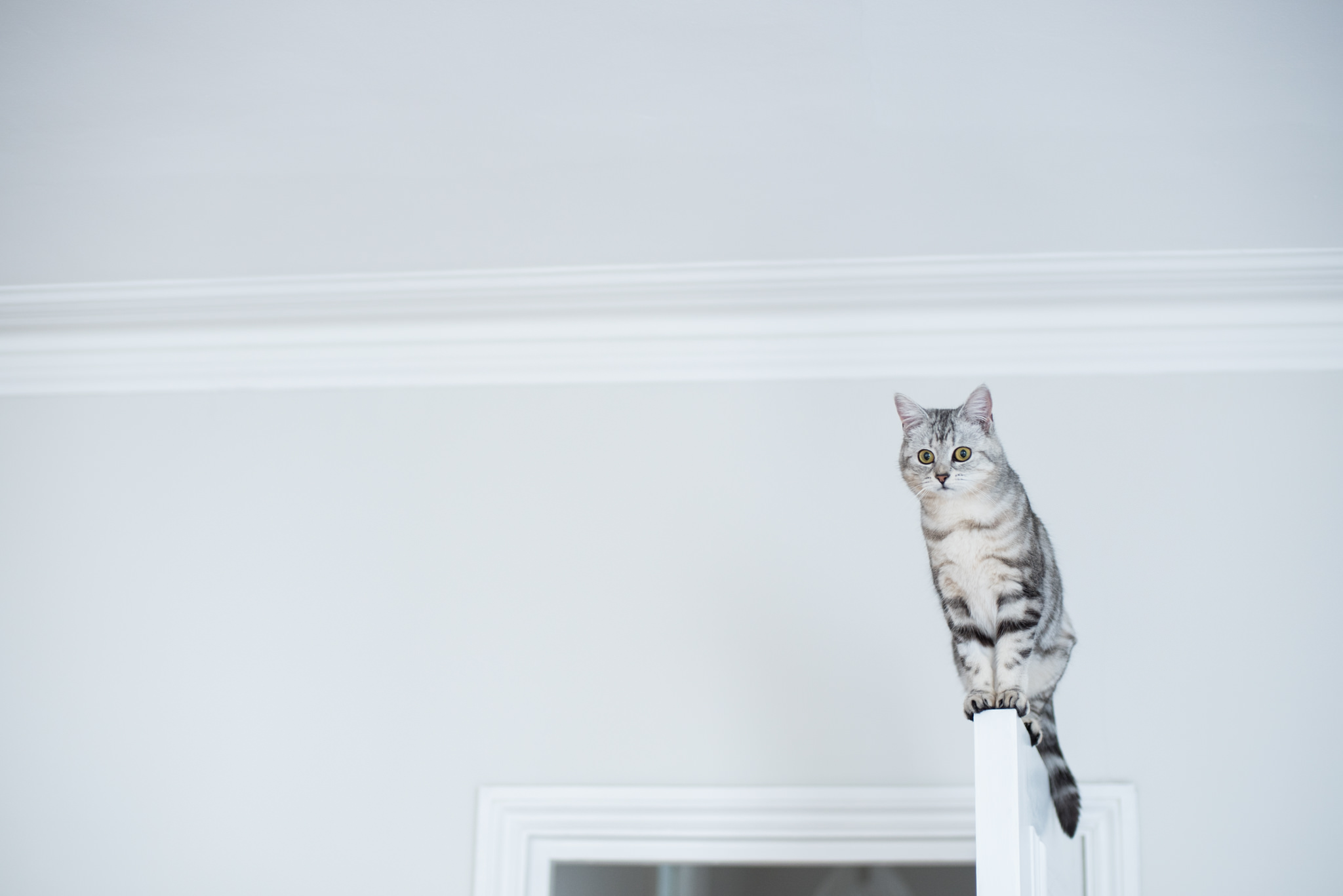 cecily-amazing-balancing-cat-door-london-grey-white-black.jpg