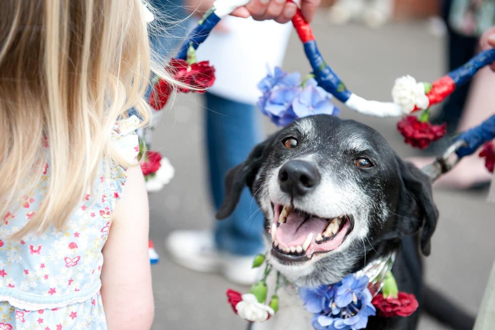 Kippen Street Fayre - Dog Show - June 2012
