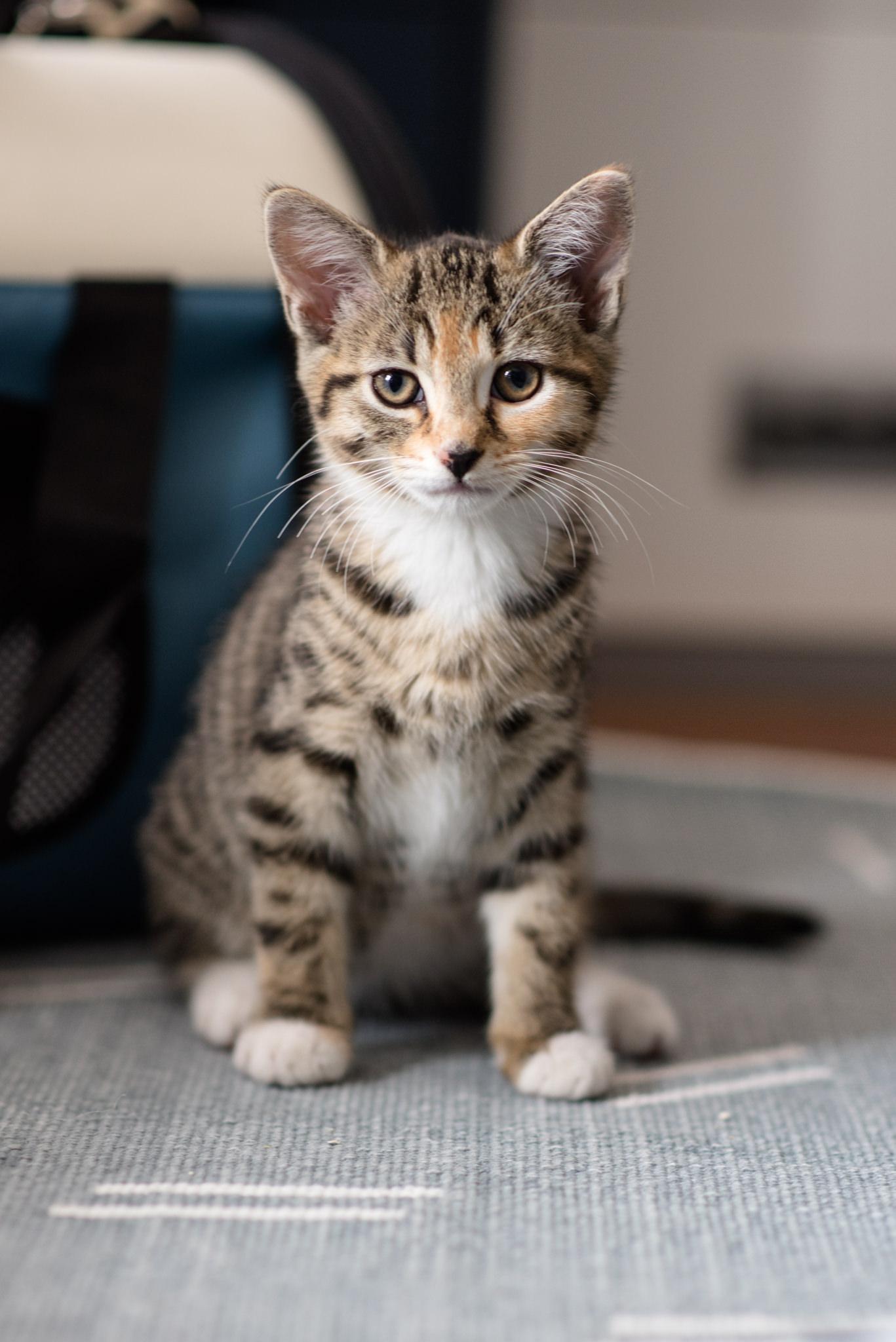 kitten-socks-poppy-003-web.jpg