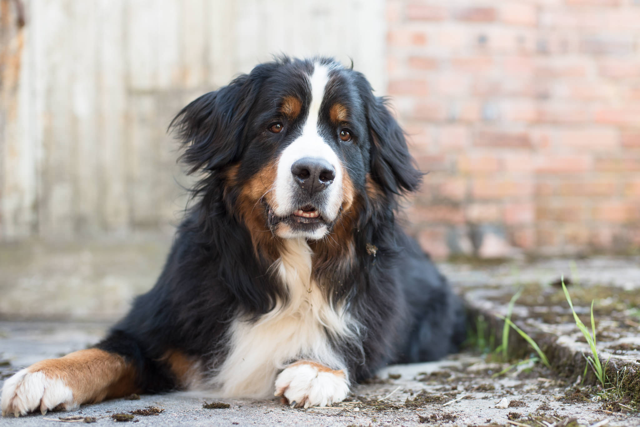 millie-mountain-dog-glasgow.jpg