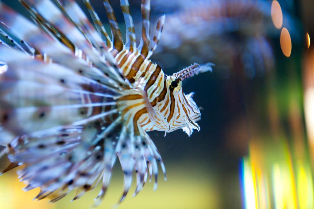 tropical-fish-st-andrews-aquarium-scotland.jpg