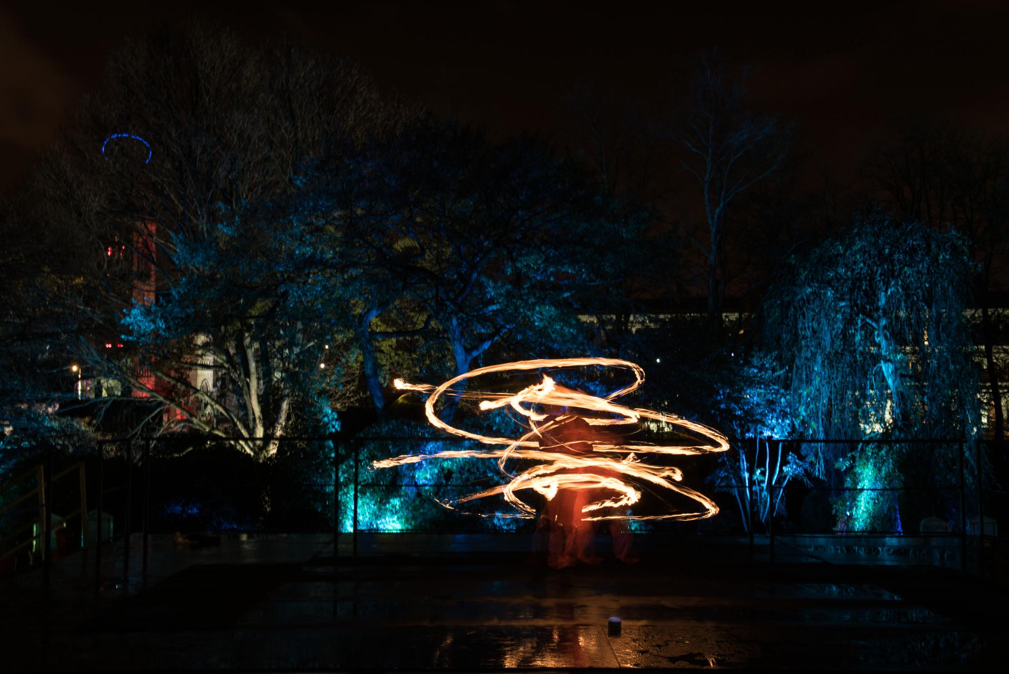 Electric Gardens - Glasgow Botanic Gardens - 13 November 2015