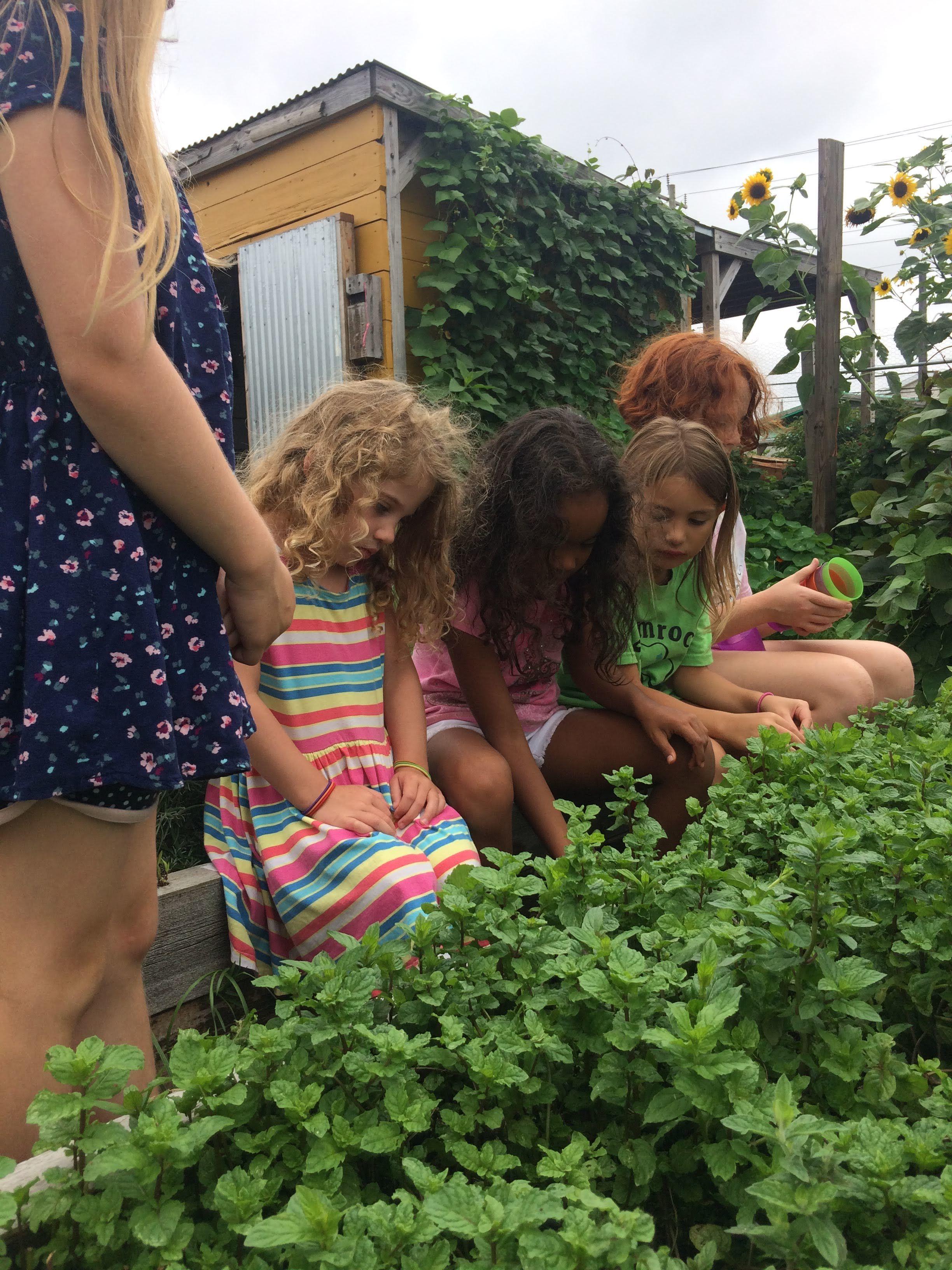 Ancestral Spirit Plants - with Catherine Feliz