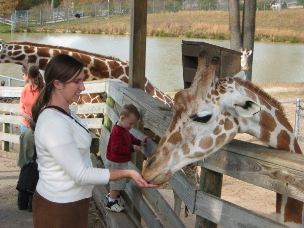 P-day at the Metropolitan Richmond Zoo. Missionaries could get in free, and it happened to be my birthday that day, so we celebrated by feeding giraffes. It was gross.