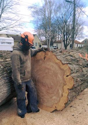 large-felled-tree.jpg