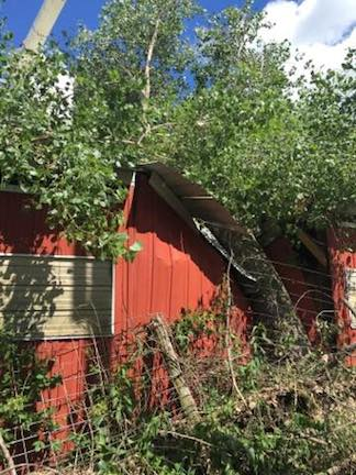 outbuilding-tree-damage-01.jpg