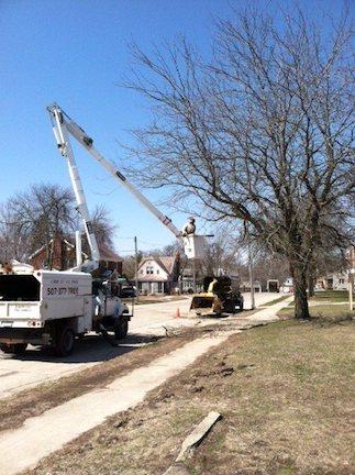 street-tree-service.jpg