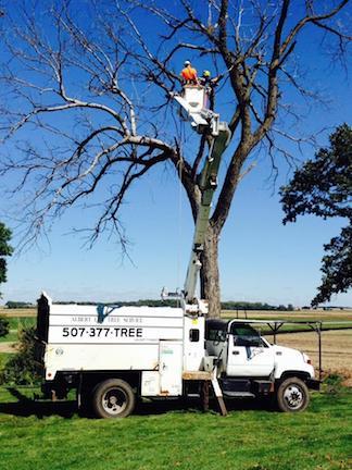 summer-tree-service.jpg