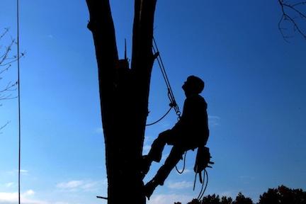 tree-climber.jpg