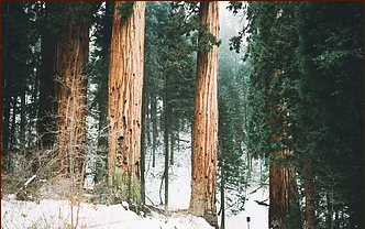winter-trees.png