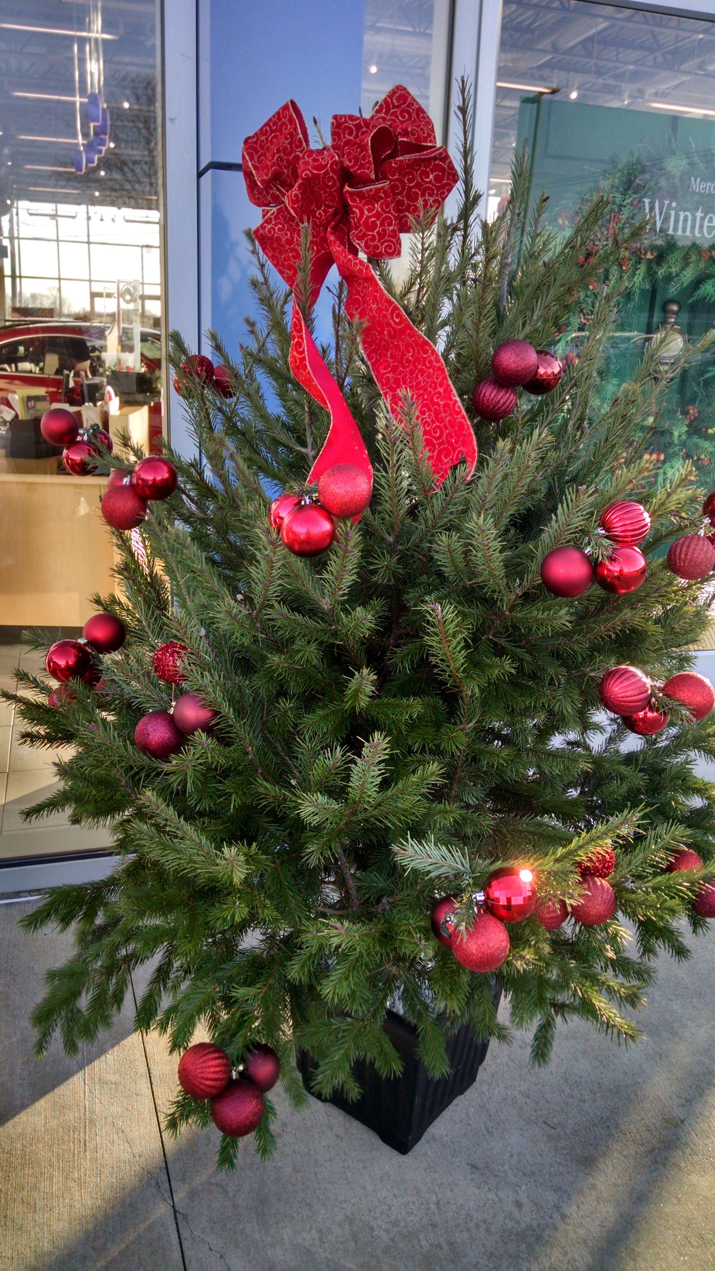 B- Boxwood tree with red ornamnets.jpg
