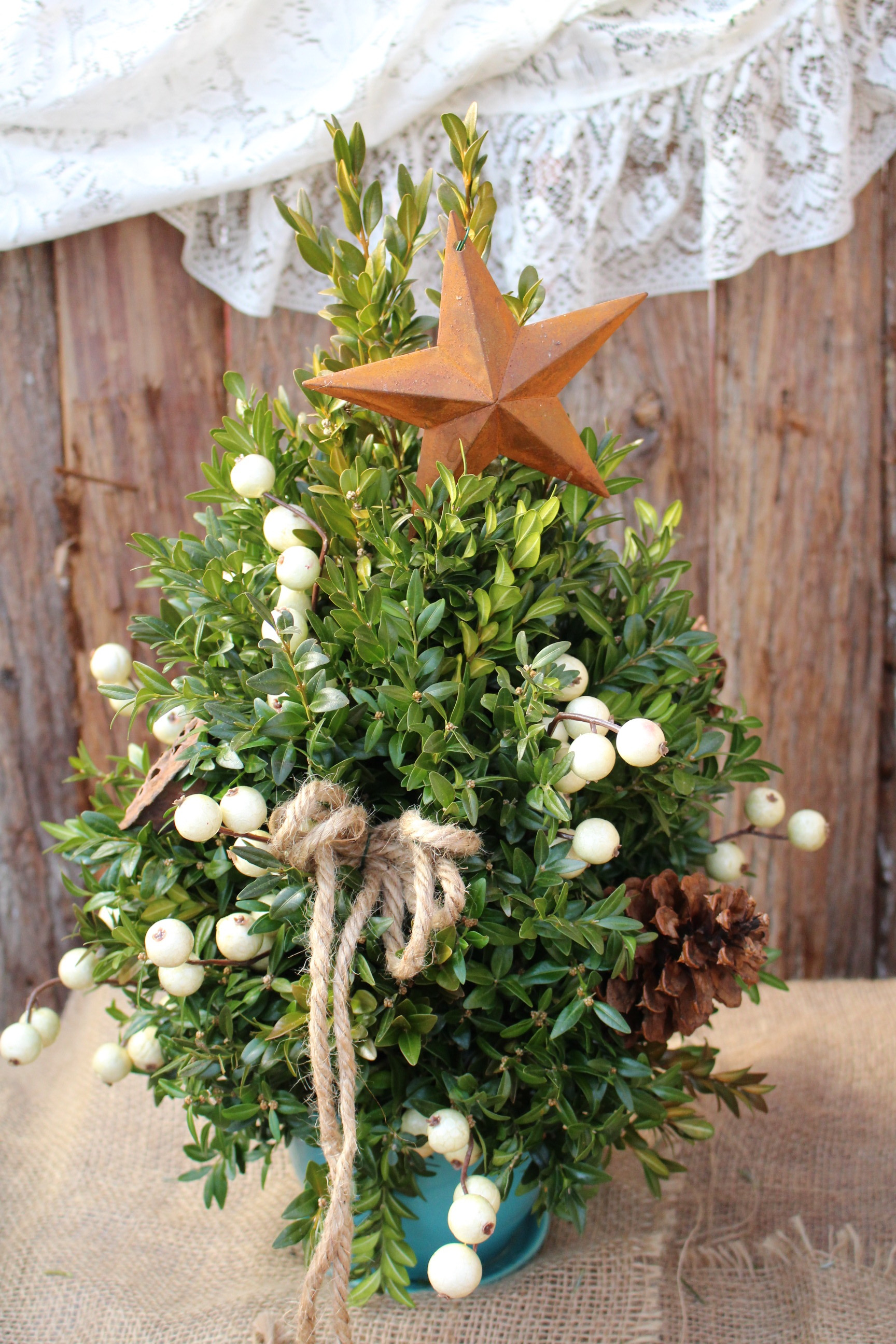 B-Boxwood tree with star topper.JPG