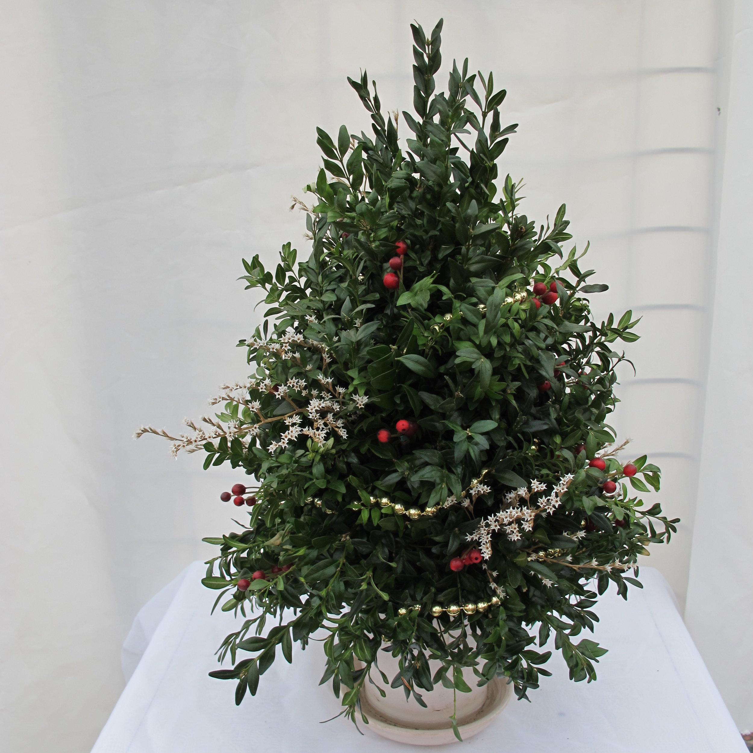 C- Simple Boxwood tree.JPG