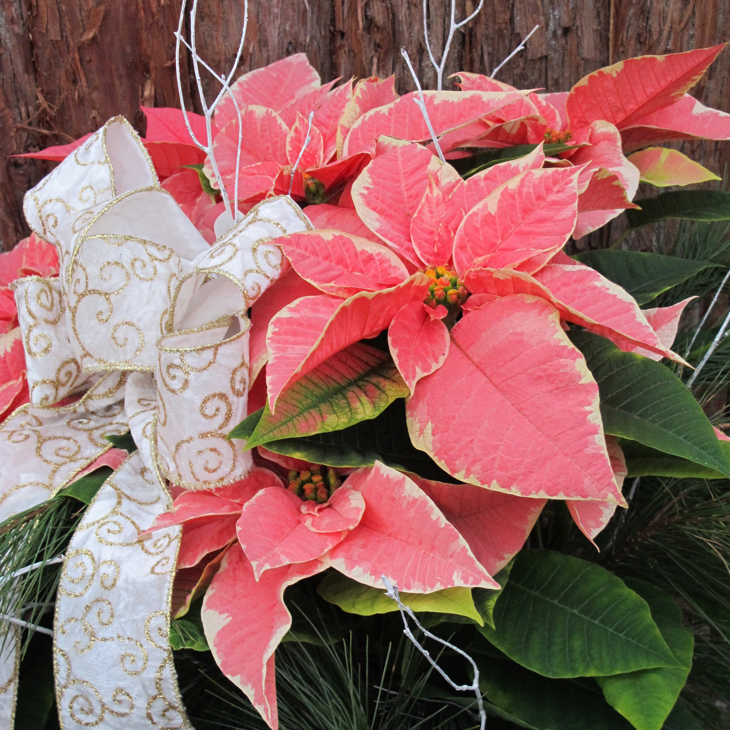 P-Marble poinsettia decorated.JPG