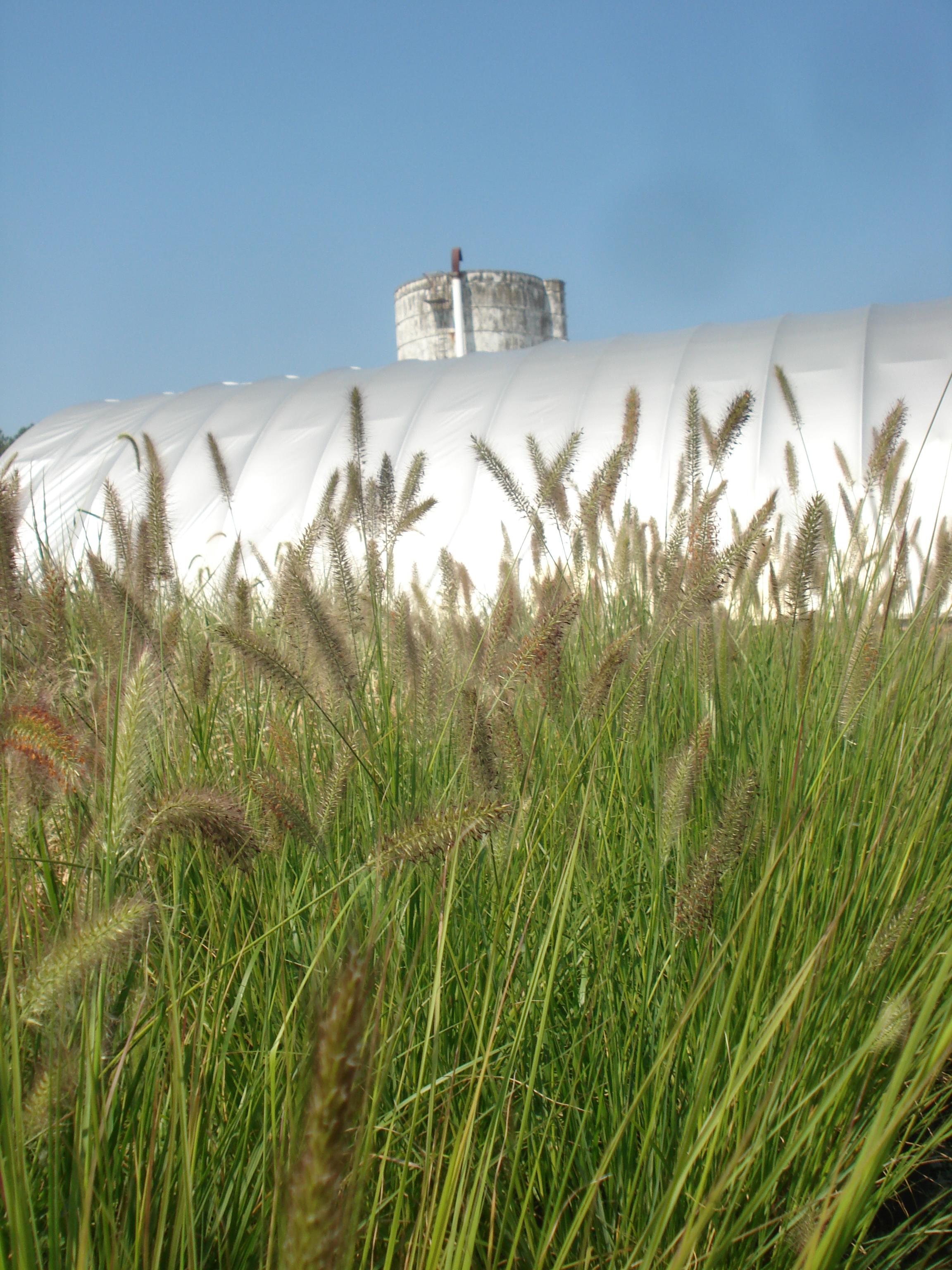 Grass with silo.JPG