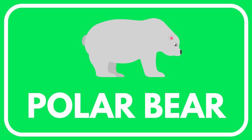 POLAR BEAR worksheets(1).png