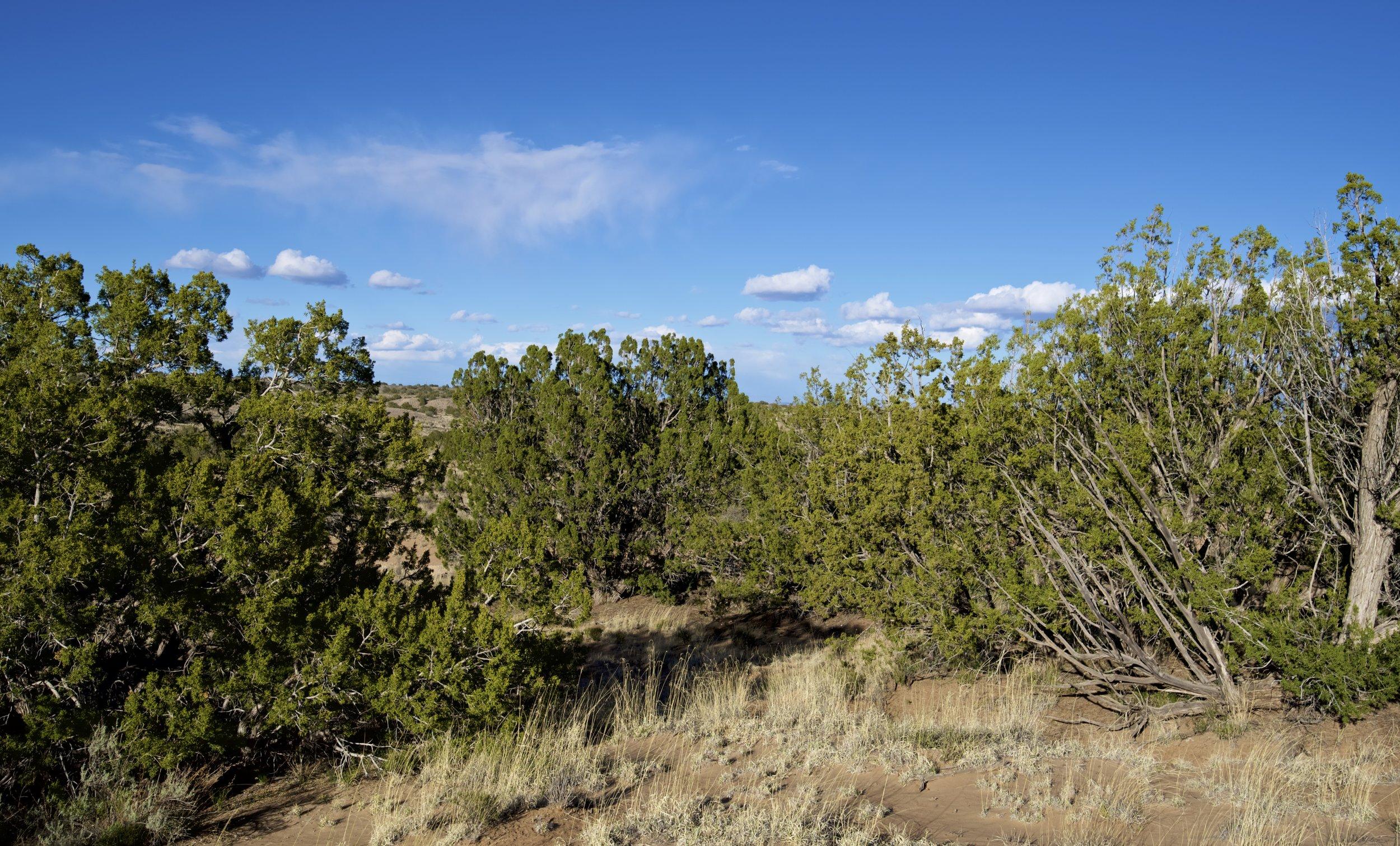 SNNM-2231-rio-rancho-125672.jpg