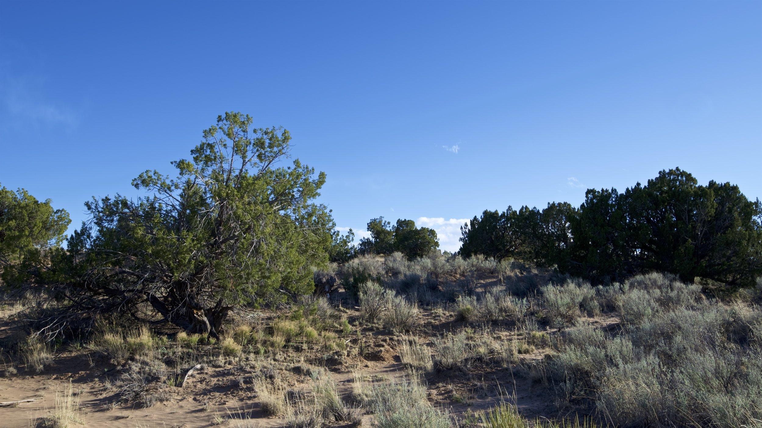 SNNM-2231-rio-rancho-125677.jpg