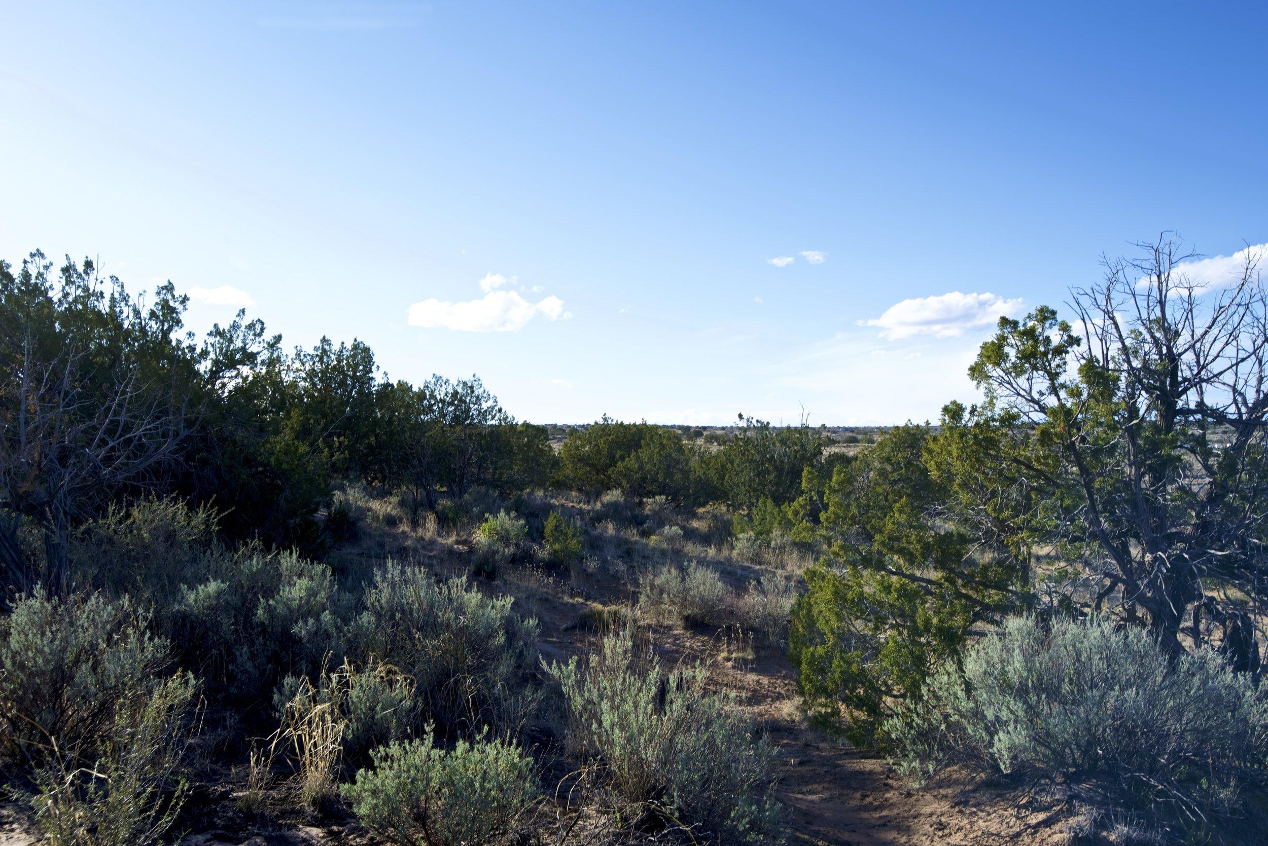 SNNM-2231-rio-rancho-125678.jpg