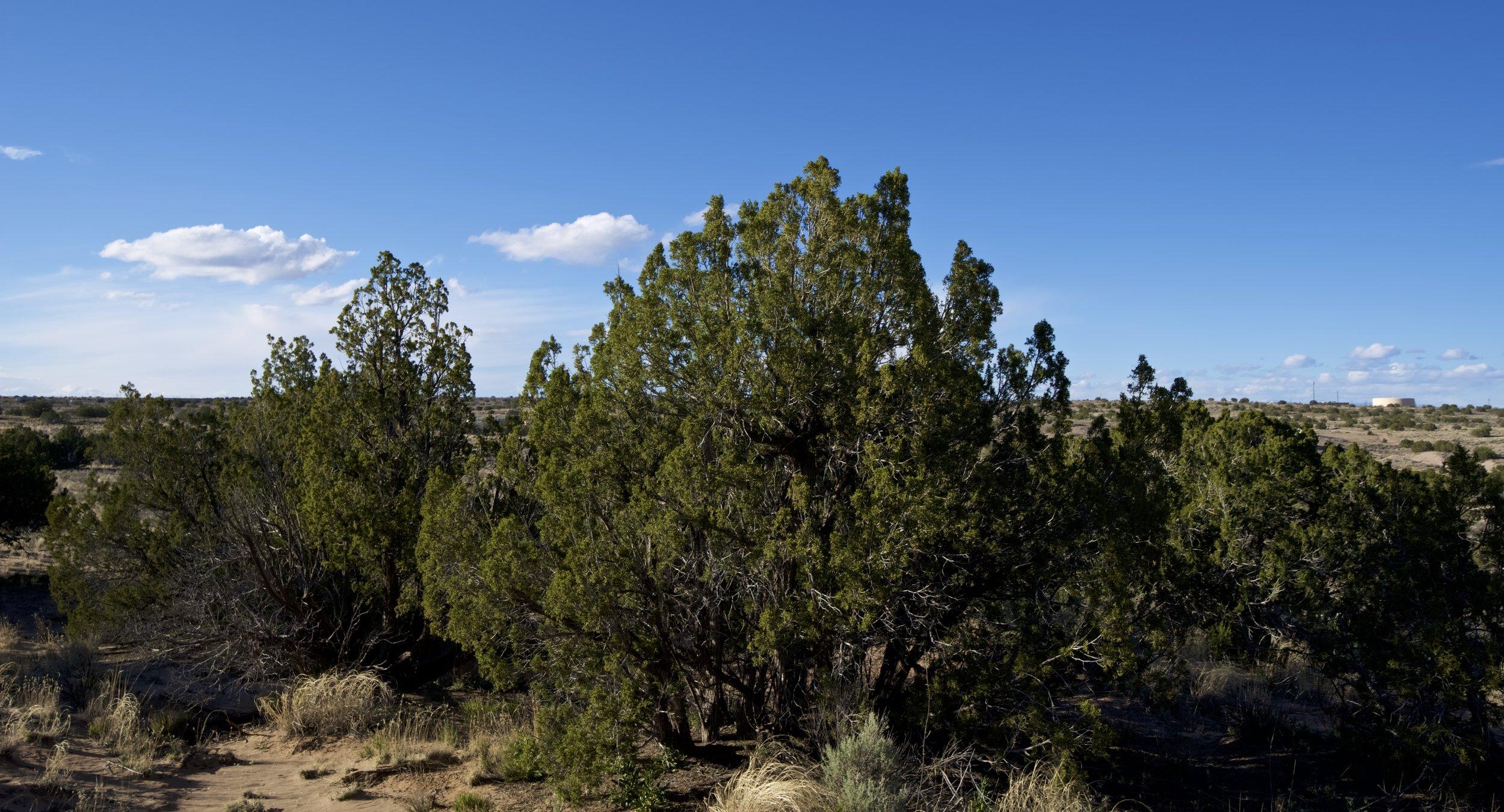 SNNM-2231-rio-rancho-125681.jpg