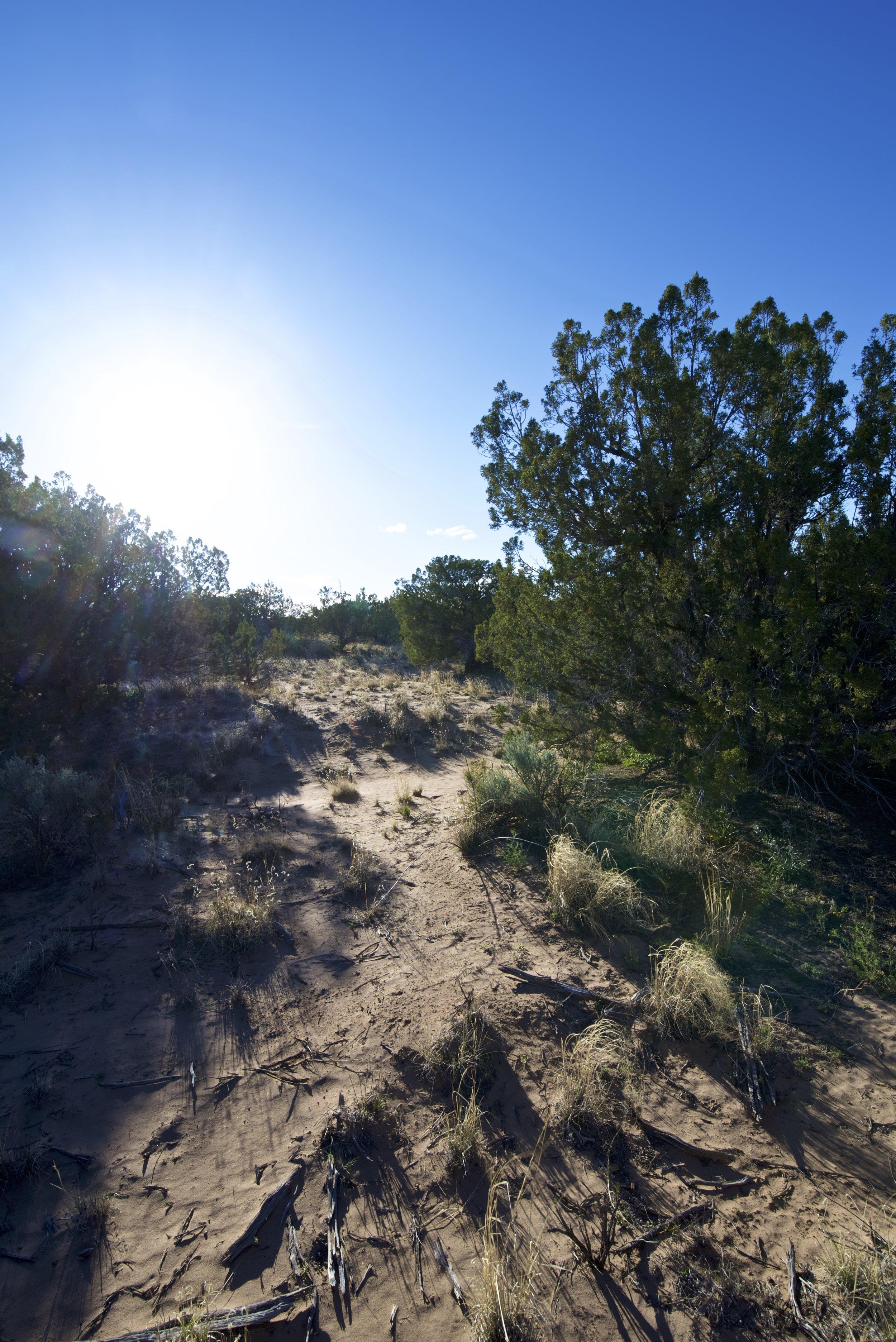 SNNM-2231-rio-rancho-125683.jpg