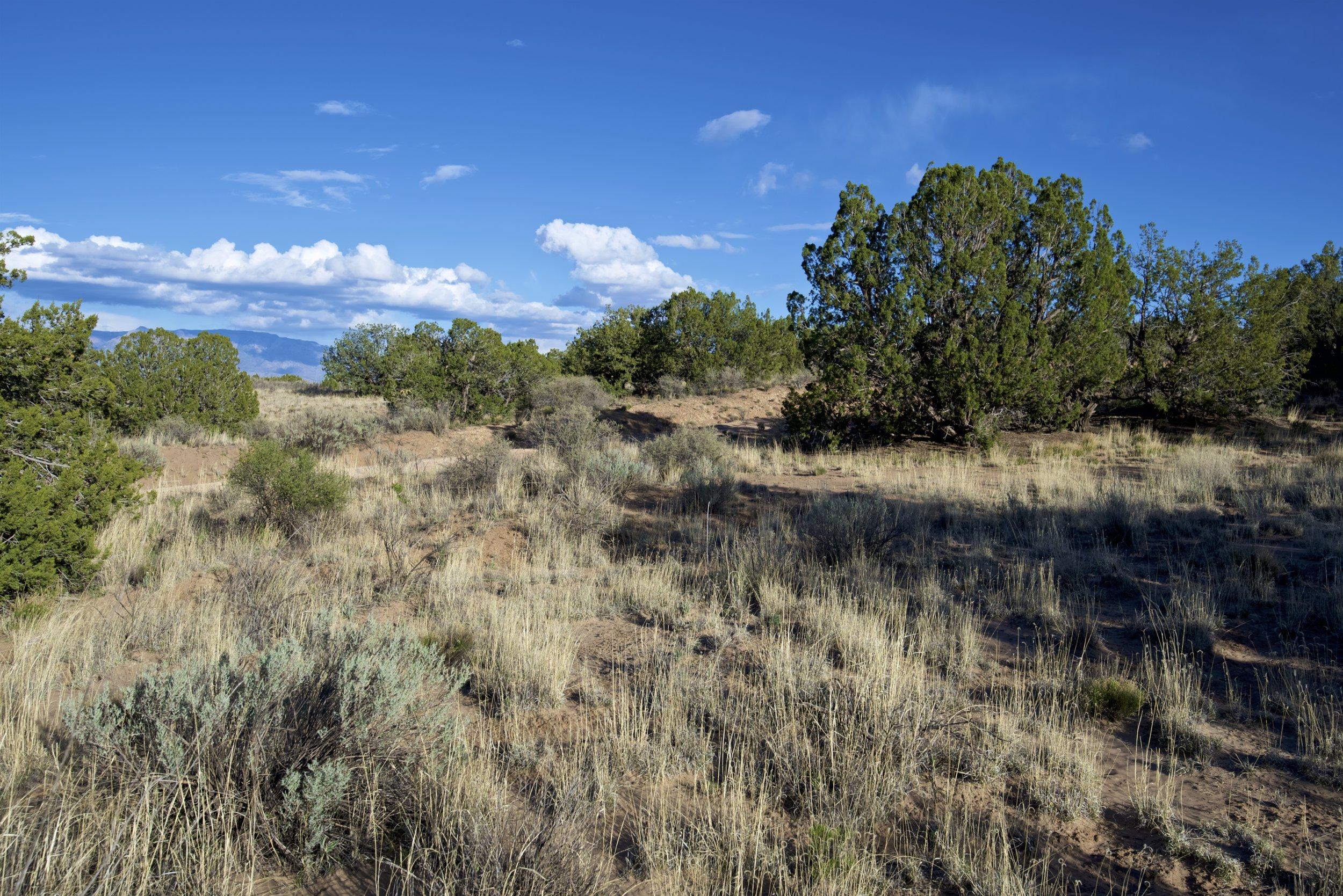 SNNM-2231-rio-rancho-125685.jpg