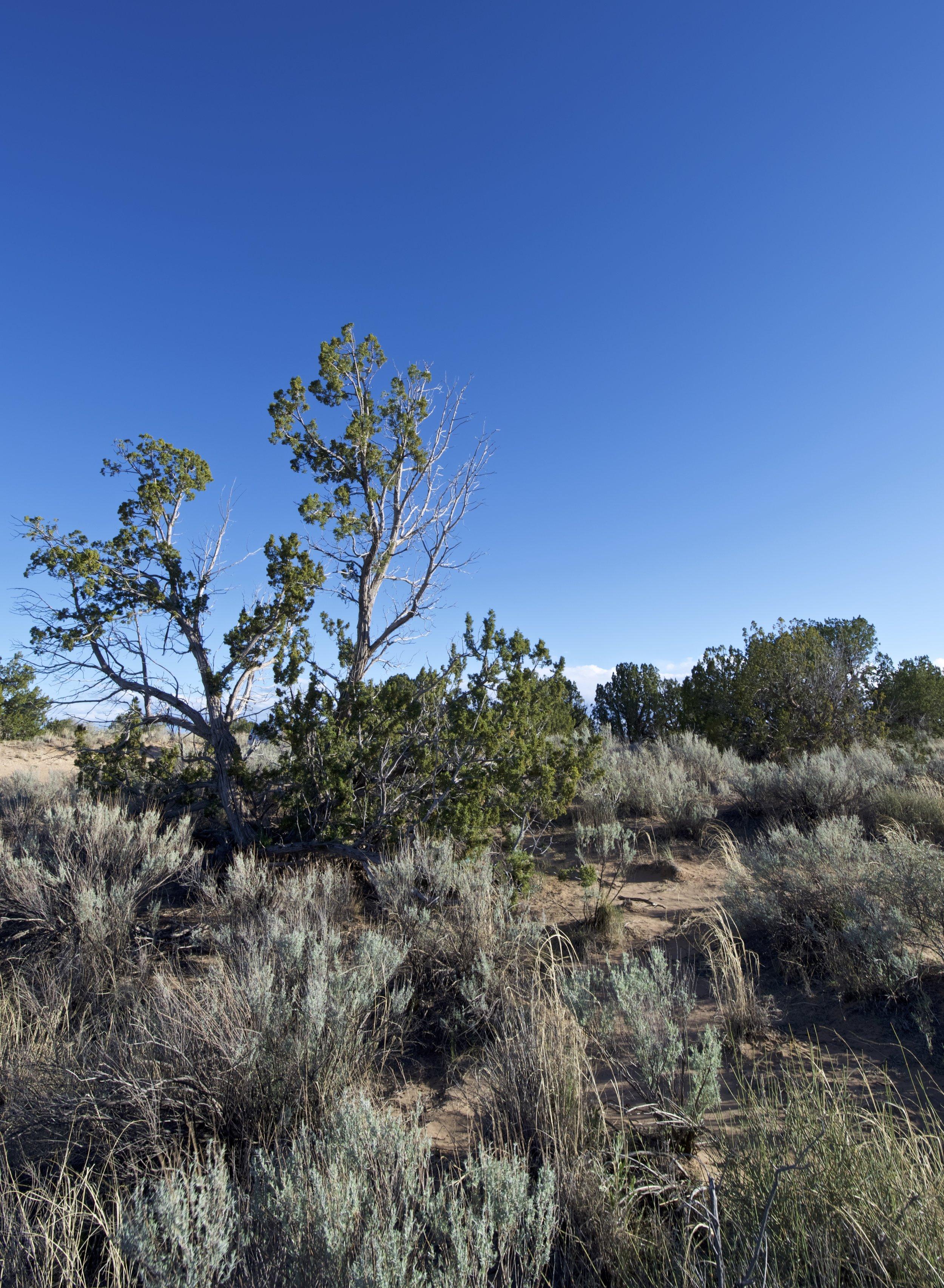 SNNM-2231-rio-rancho-125697.jpg