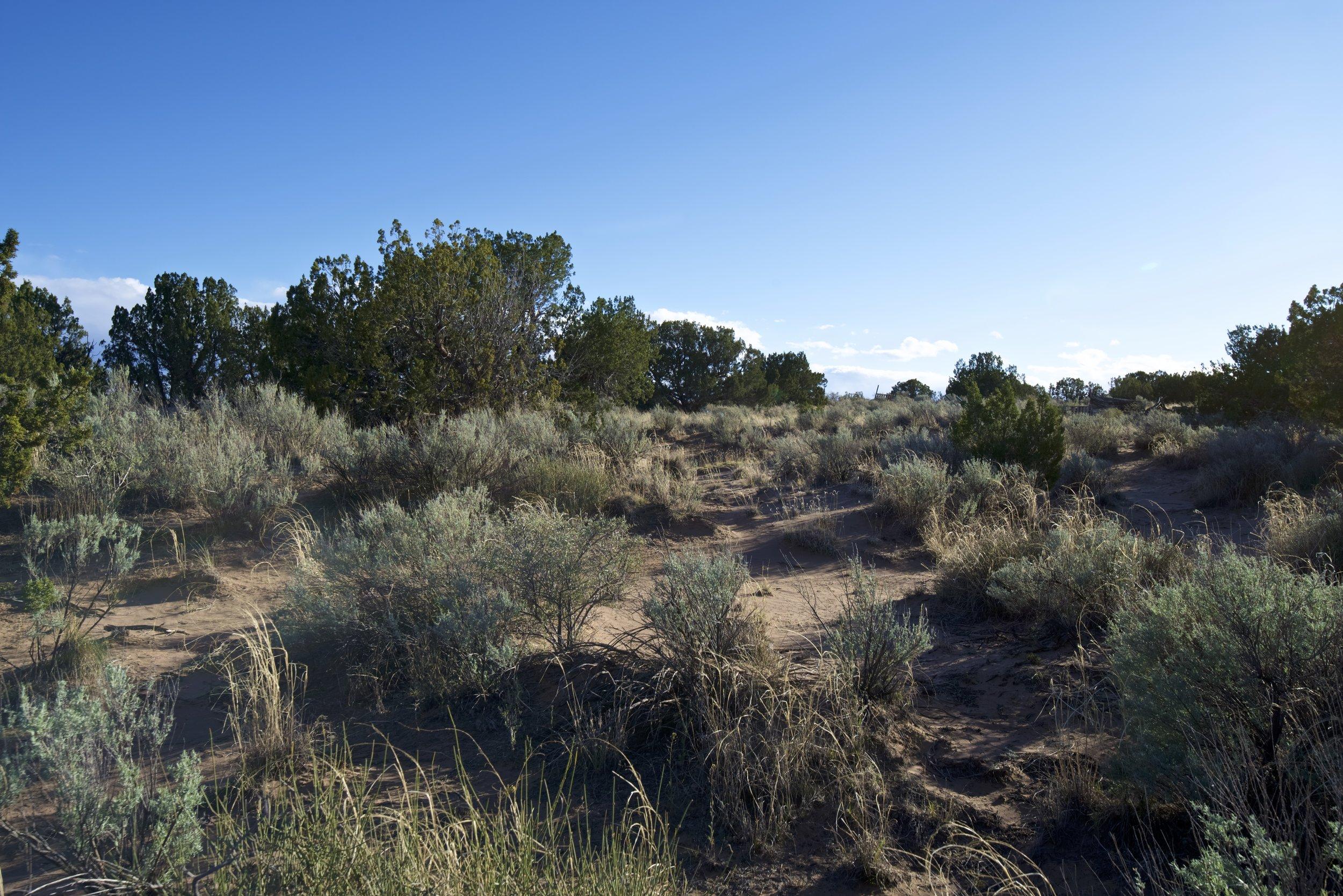 SNNM-2231-rio-rancho-125696.jpg