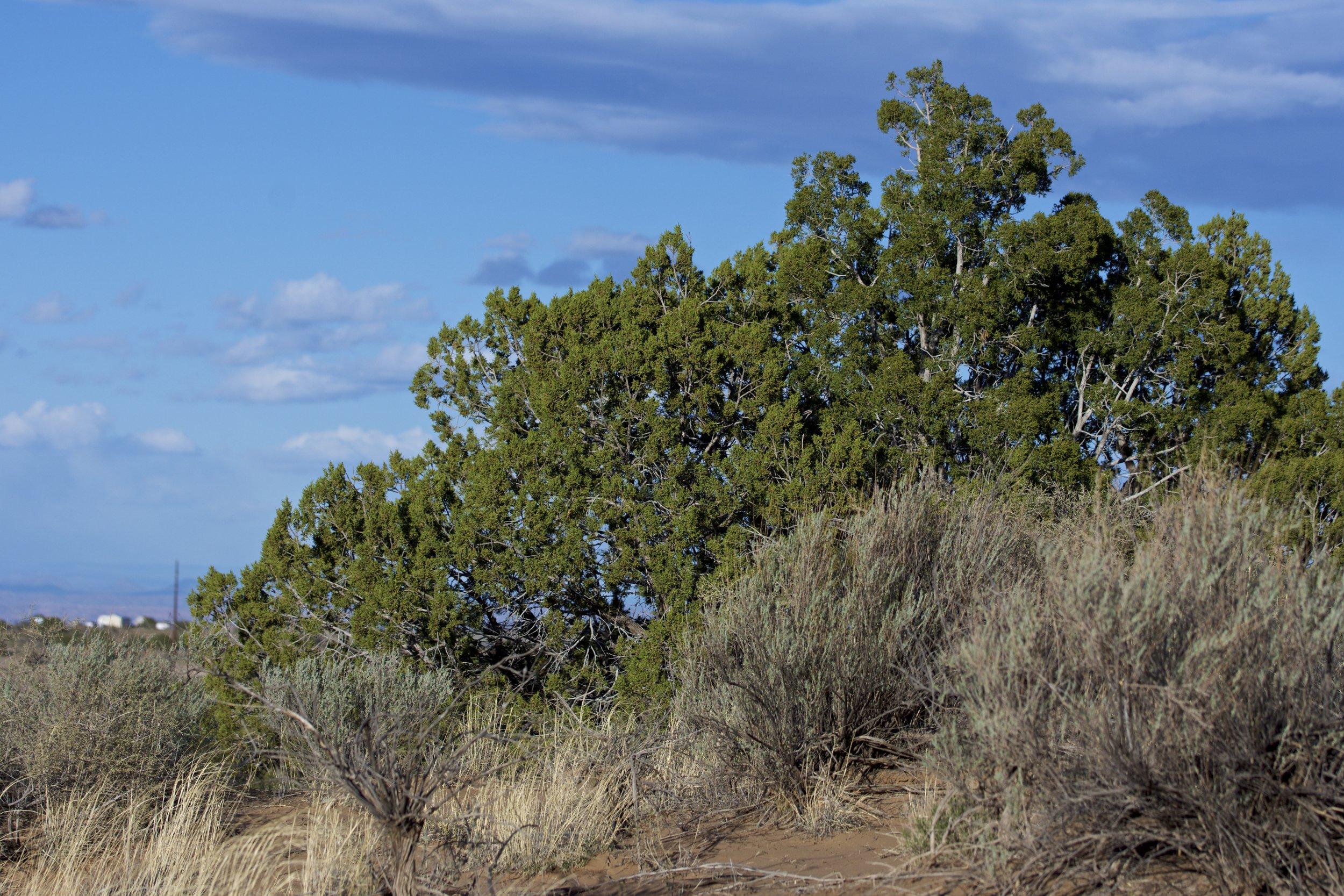 SNNM-2231-rio-rancho-125730.jpg
