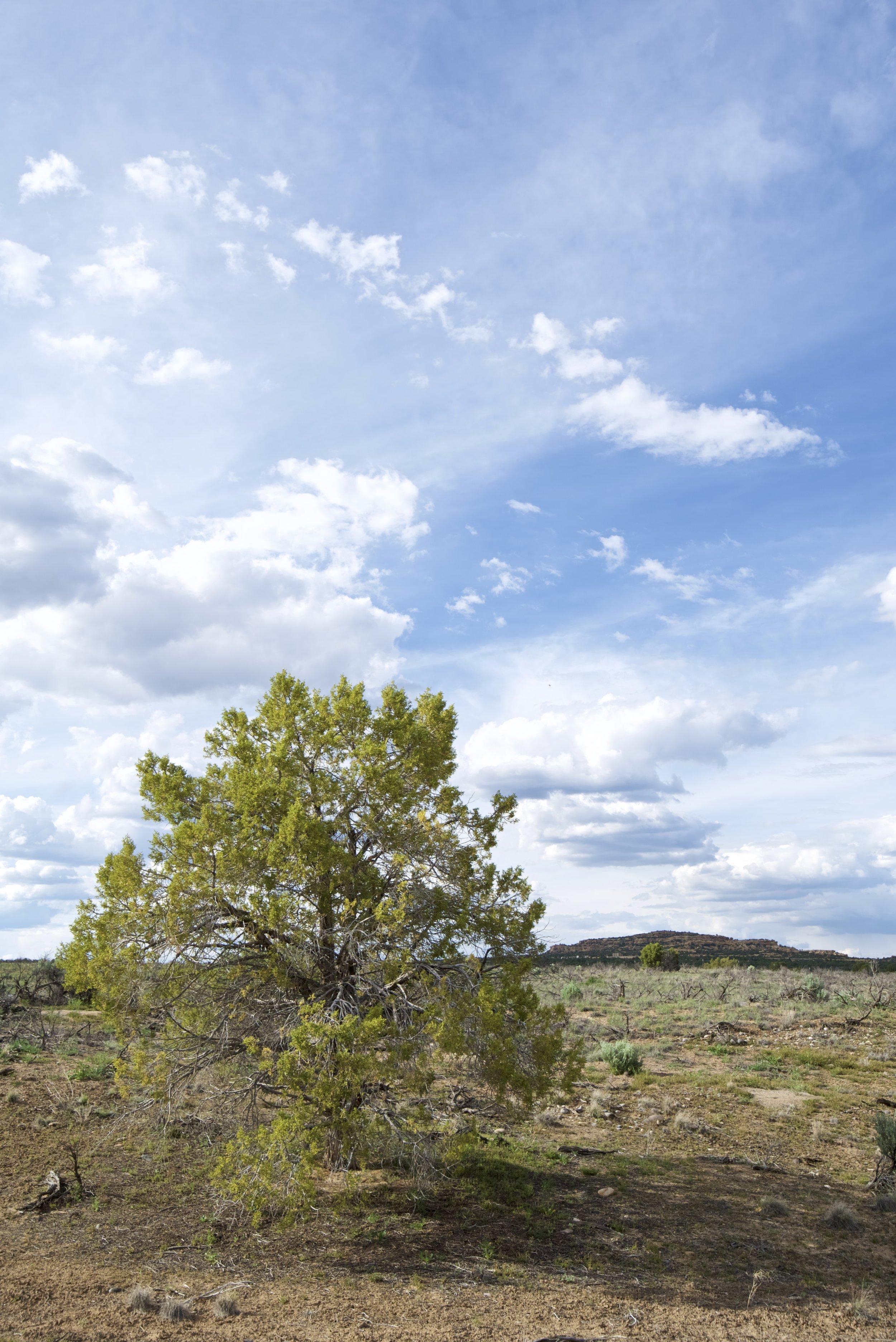SJNM-4393-navajo-dam-128023.jpg