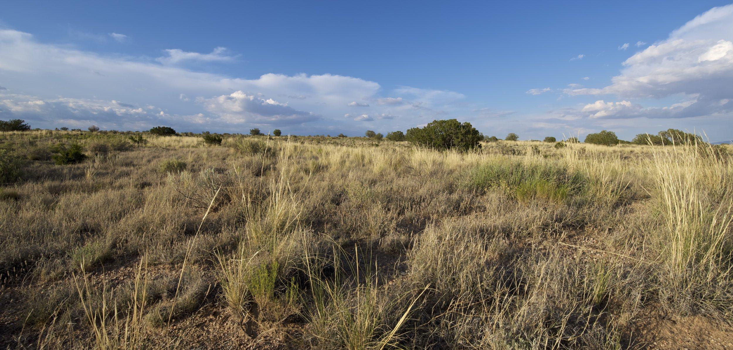 SNNM-BFG-rio-rancho-132760.jpg