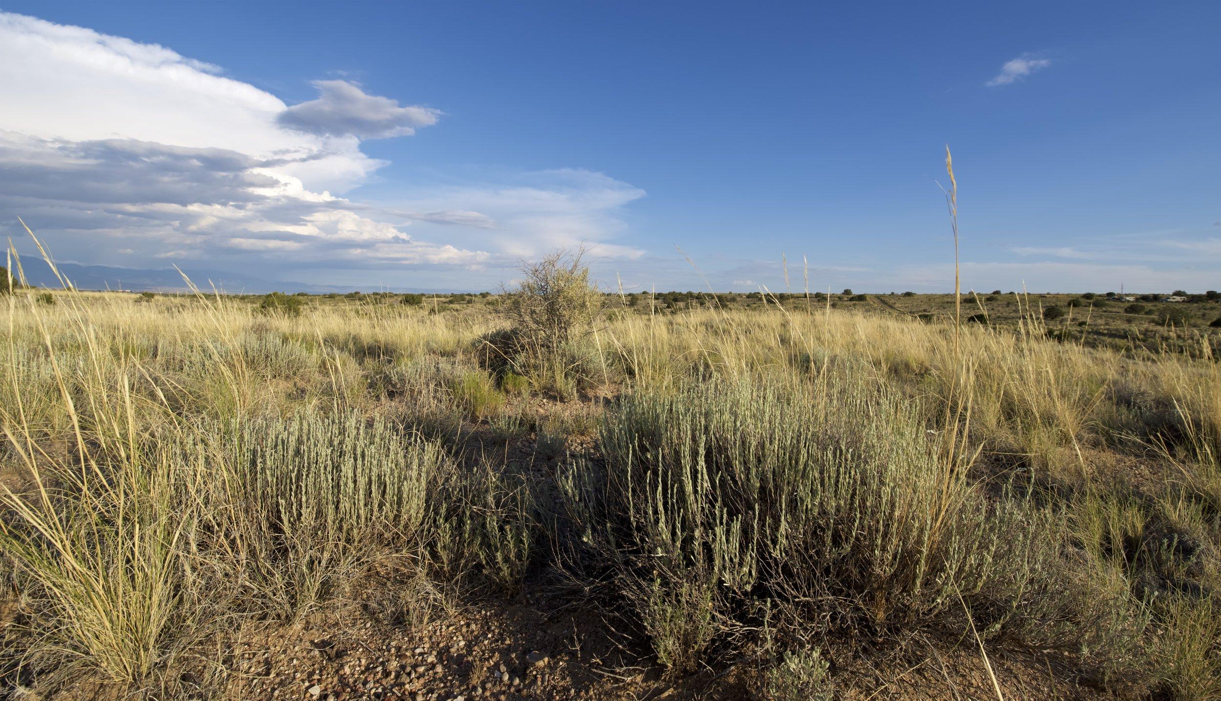 SNNM-BFG-rio-rancho-132761.jpg