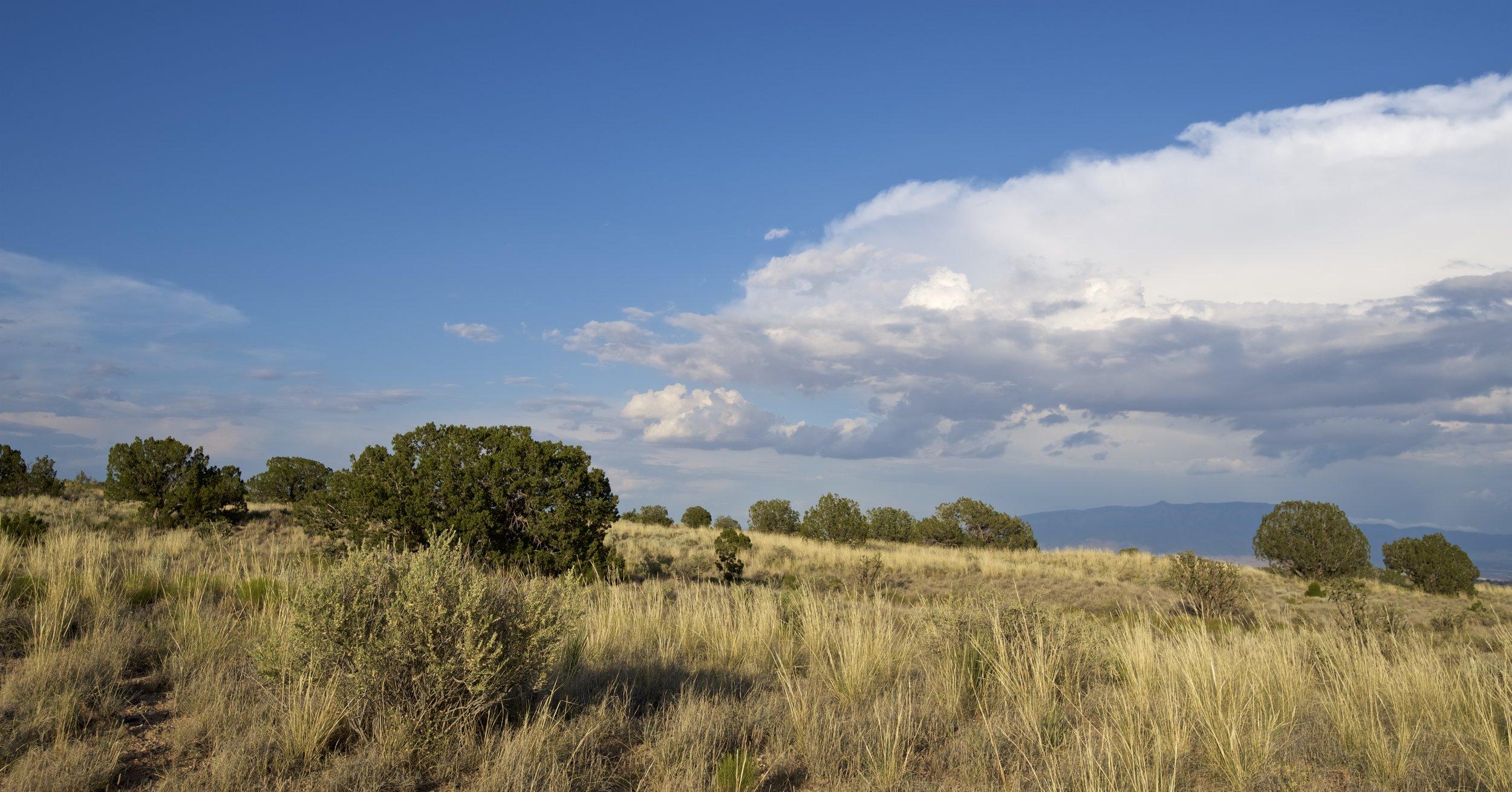 SNNM-BFG-rio-rancho-132764.jpg