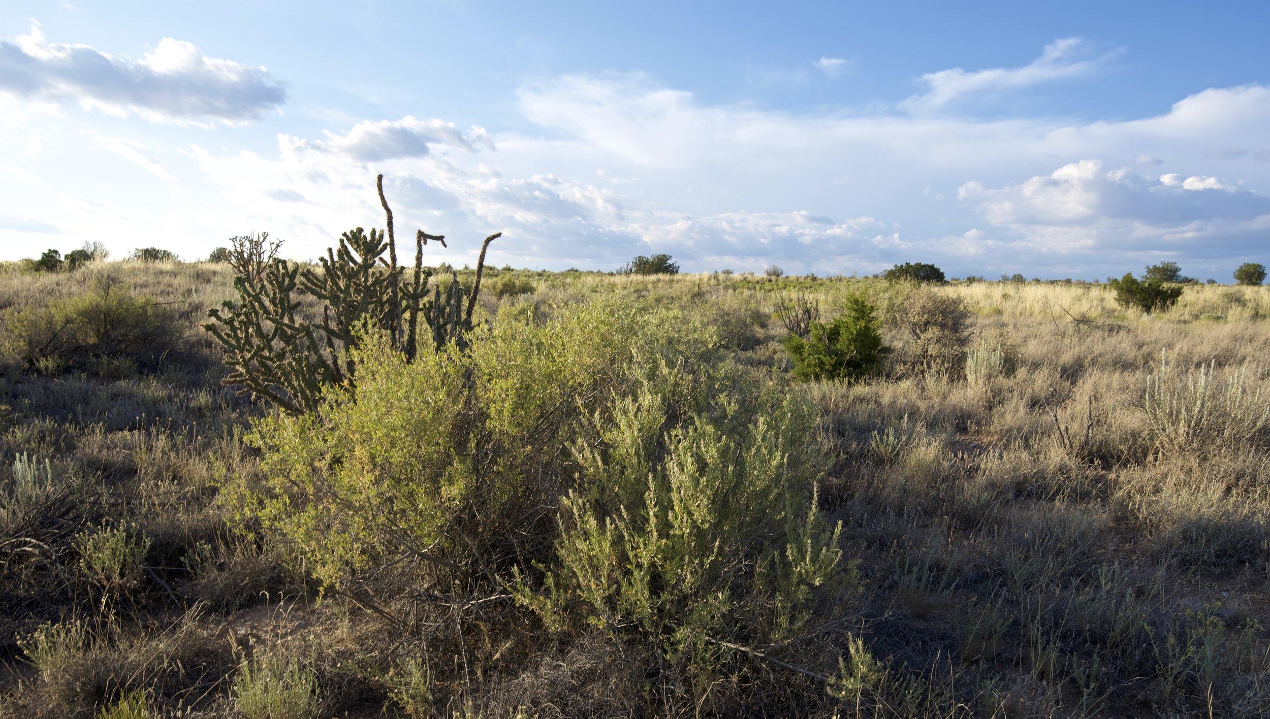 SNNM-BFG-rio-rancho-132763.jpg