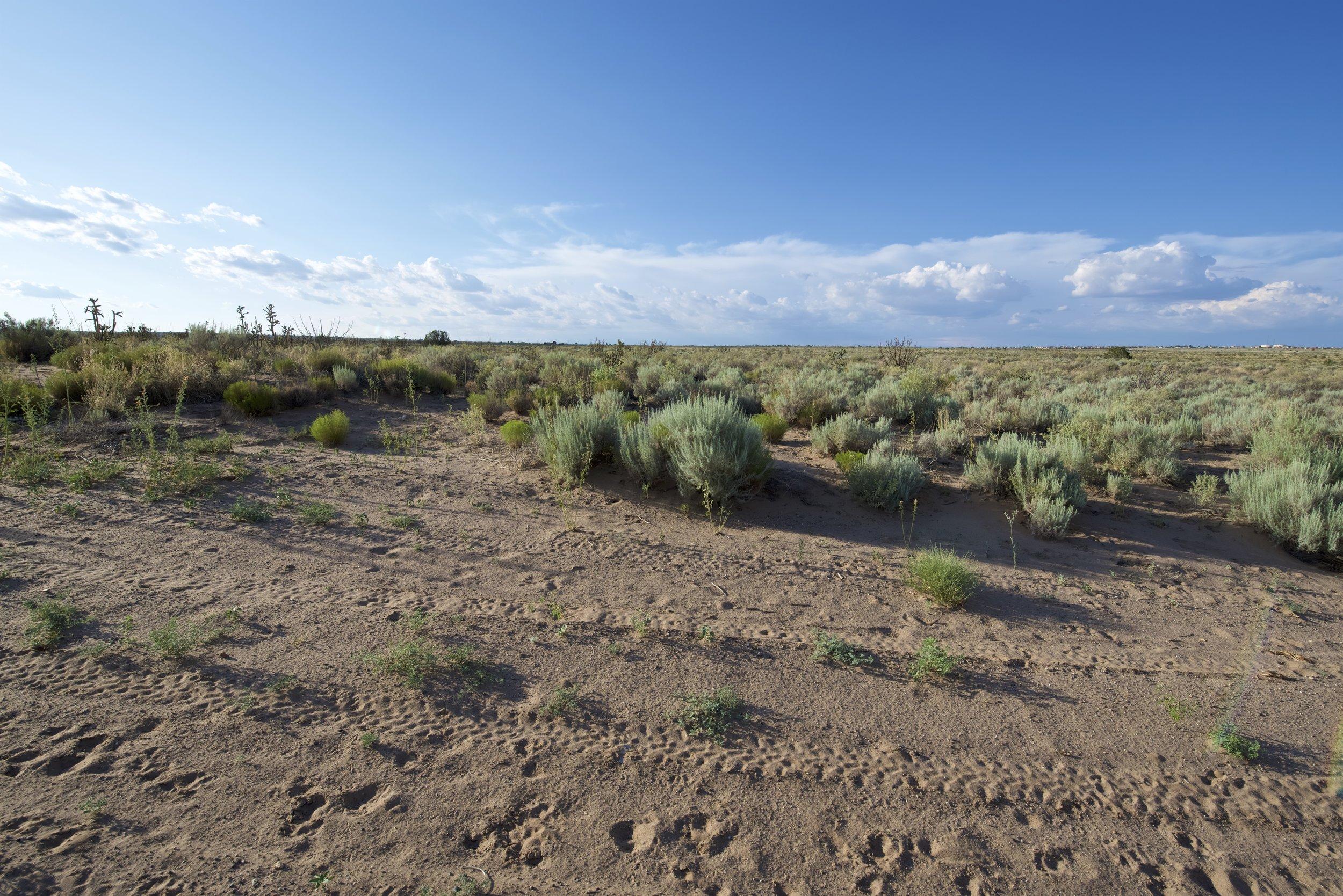 SNNM-BFG-rio-rancho-132738.jpg