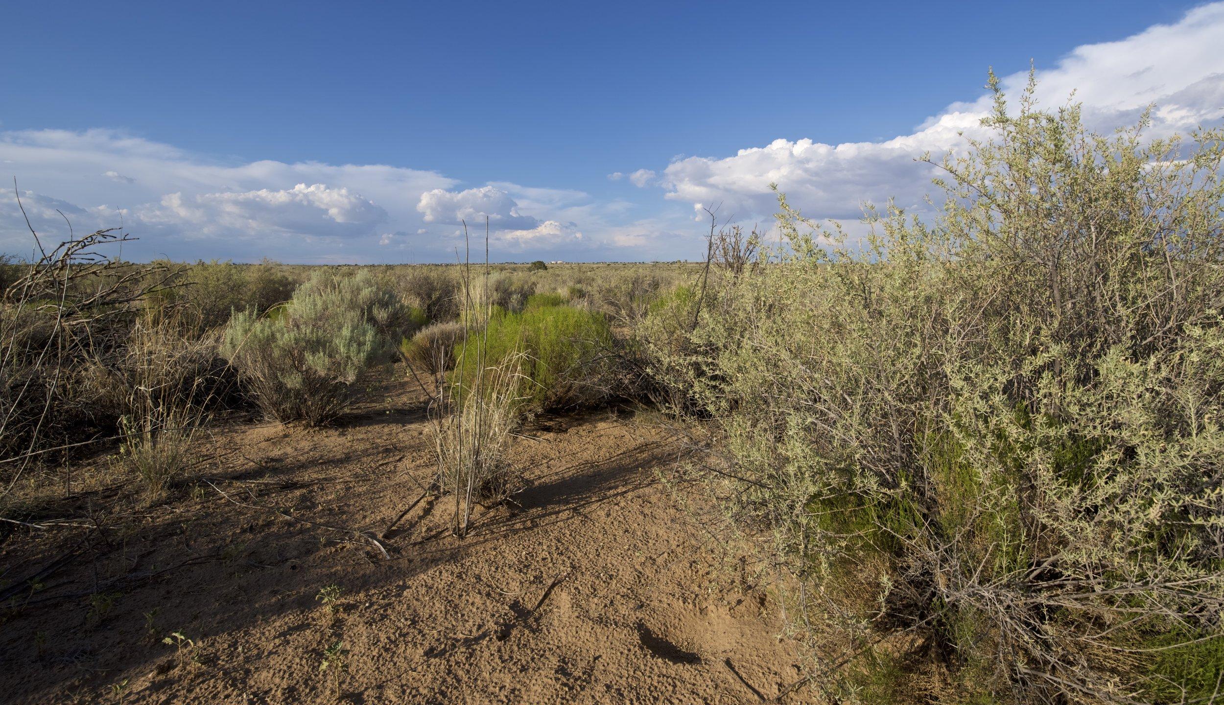 SNNM-BFG-rio-rancho-132744.jpg