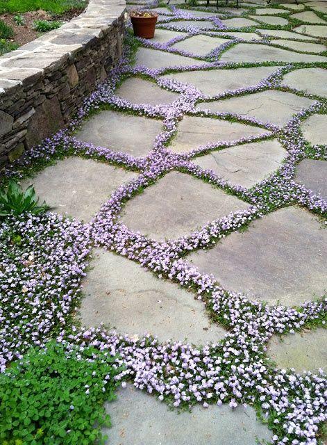 sweet-garden-path-ground-cover.jpg