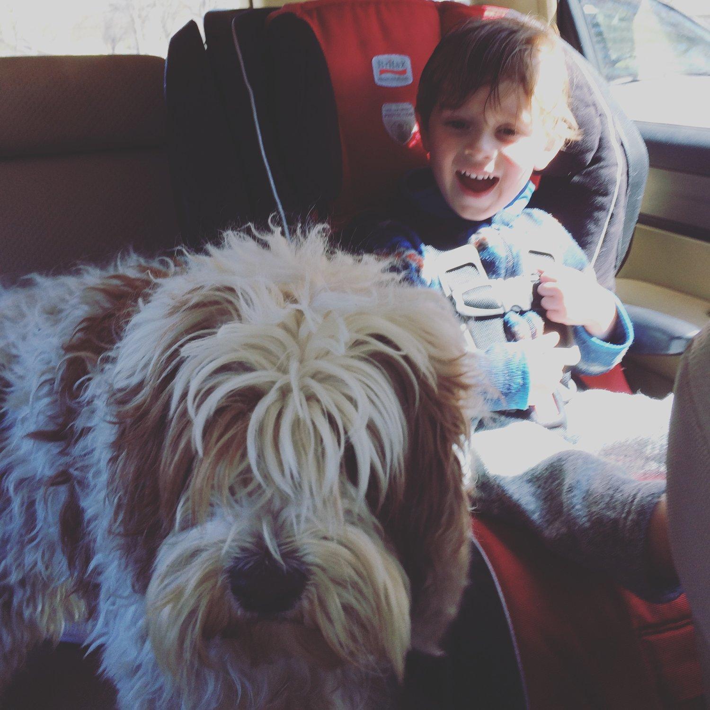shaggy+dog.jpeg