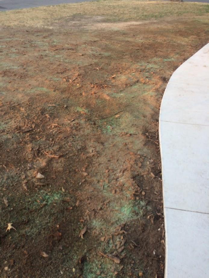 growing grass 2.jpg