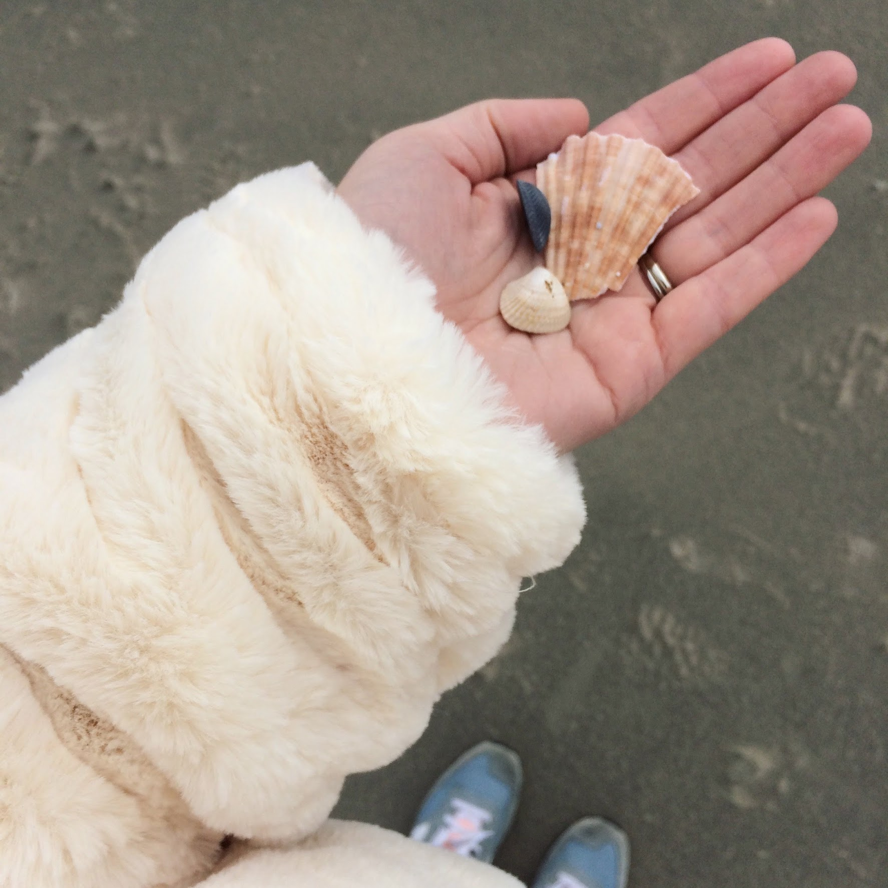 shells at christmas.jpg