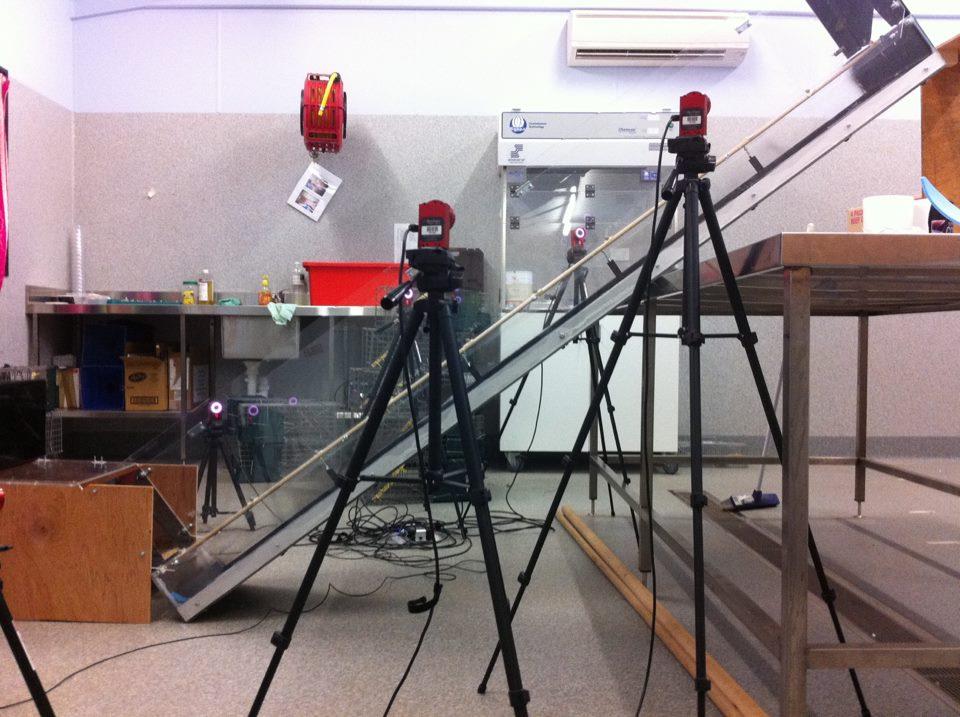 Setup for testing motor skill in small mammals