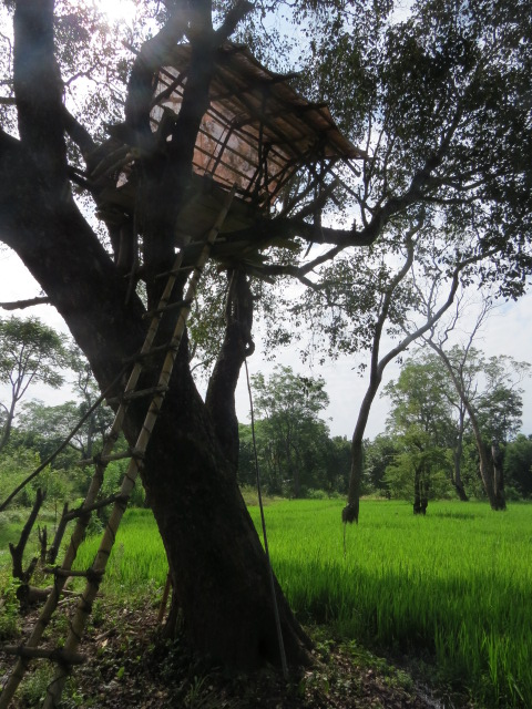 The tree hut for night observation on crop raiding elepahnts built in a village paddy land