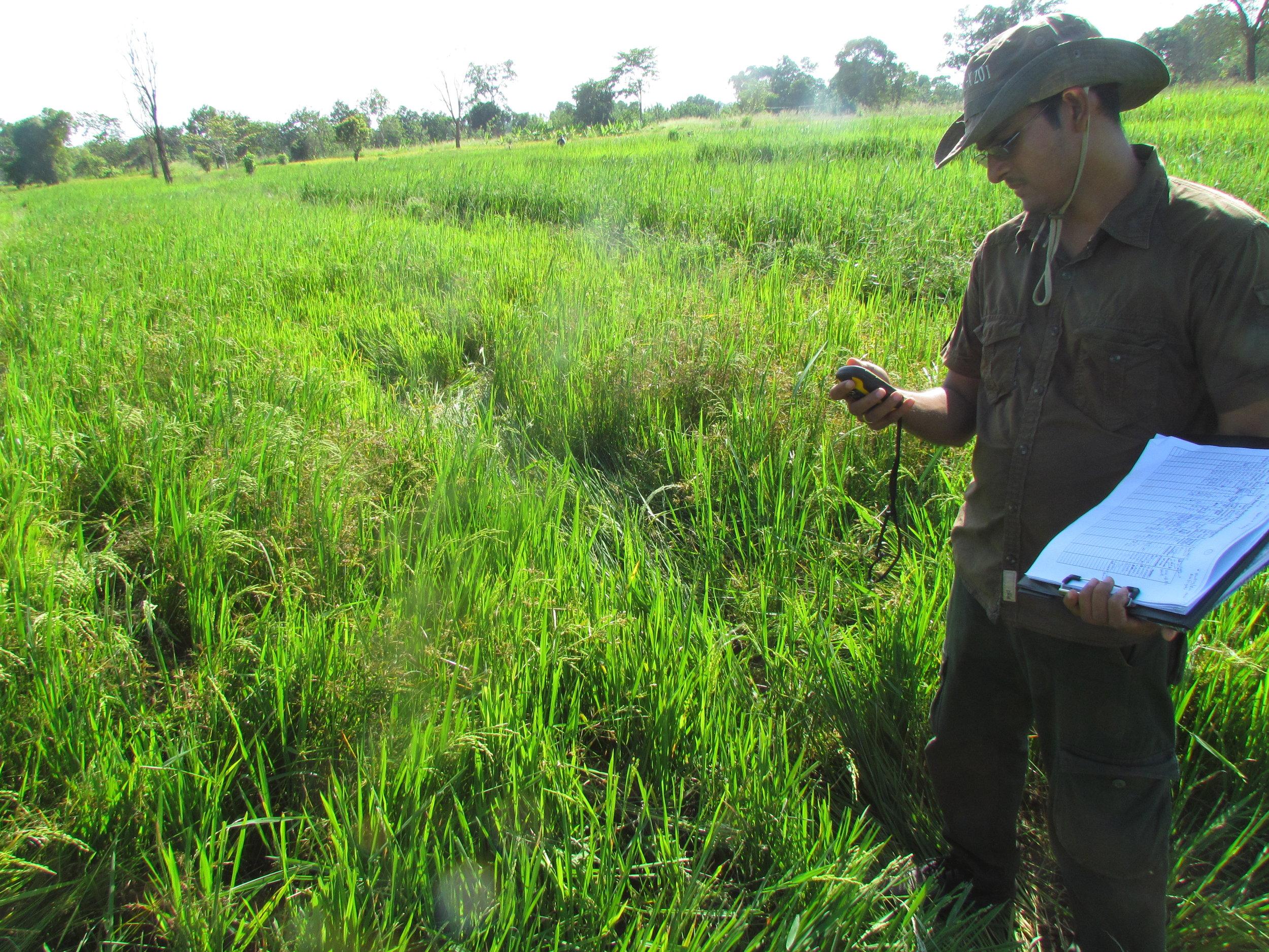 Ashoka monitoring elephant damages to crops in the villages bordering the Udawalawe National Park