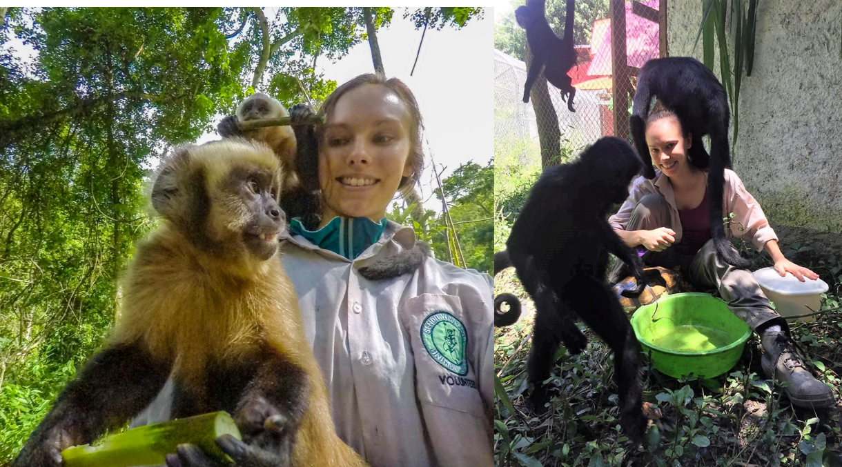 Playing with Capuchin monkeys and trying to polish Rambo's (the tortoise) shell – Bolivian animal refuge